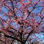 もう春はすぐそこ